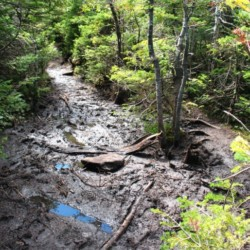 A mud pit in the middle of a trail
