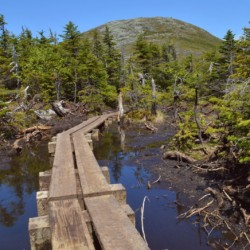 Bog bridges on Boundary leading to Iroquois