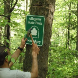 A man tacking up an Alleghany State Park sign