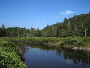 Calamity Brook