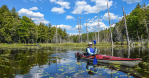 Kayaker paddling through pond filled with lilly pads, reflecting blue sky and white clouds.