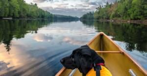 Black dog in canoe