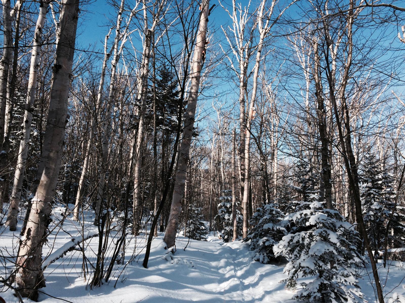 The Klondike Trail in winter