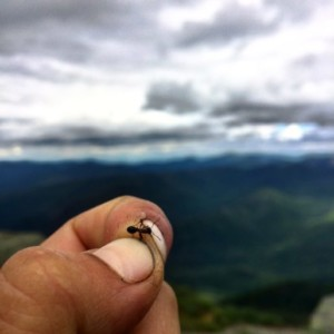 Ant in a person's hand