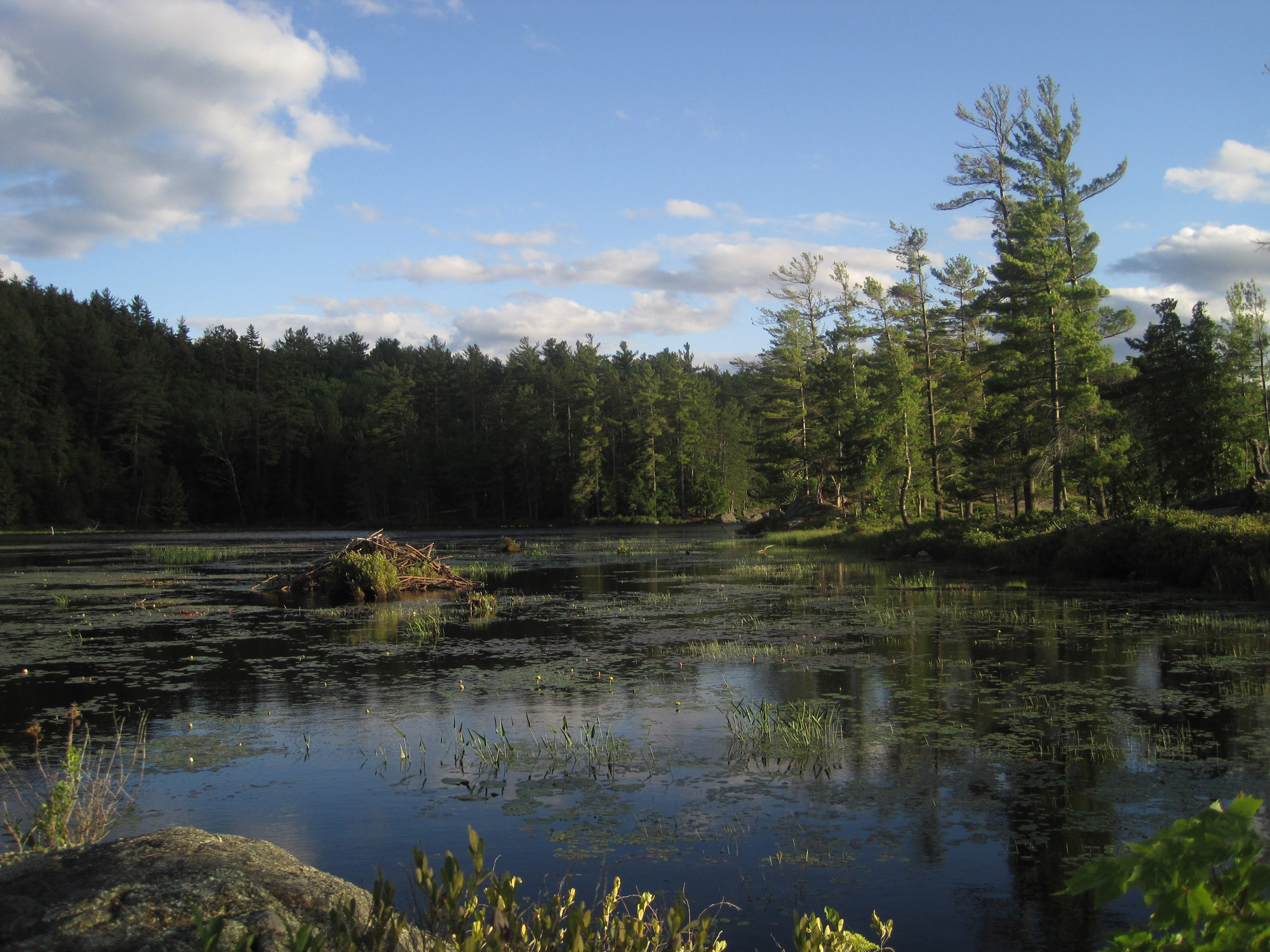 A wetland in the Western Adirondacks