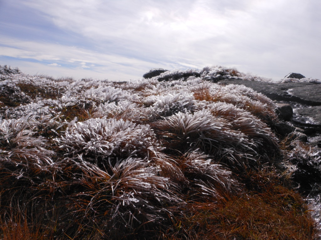 Frost covered alpine plants on a summit