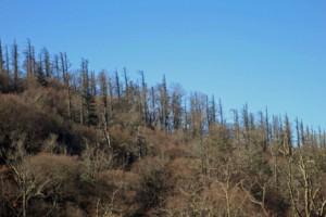 Dead trees on Hemlock Hill by Mark Whitmore