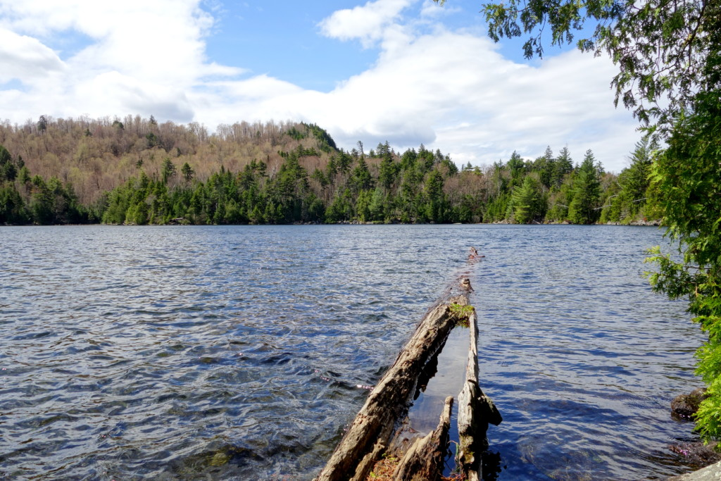 A backcountry lake with a log