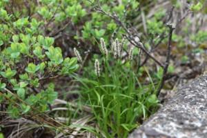 Alpine vegetation sticking up through a rock crack