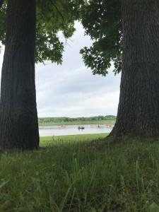 Looking between two trees toward a lake