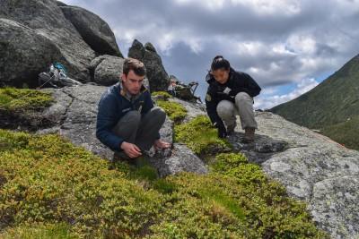 Botany stewards surveying alpine plants