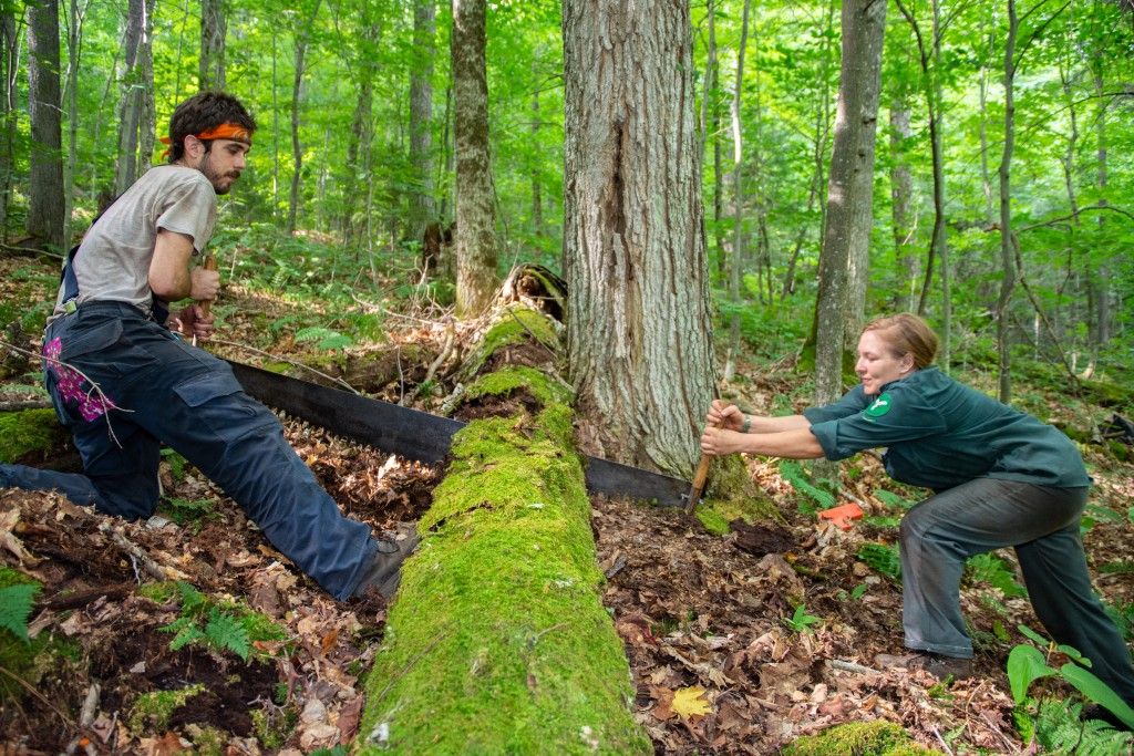 Two trail crew members use a cross cut saw to clear a log