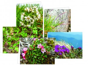 Imperiled Alpine Plant Card Set