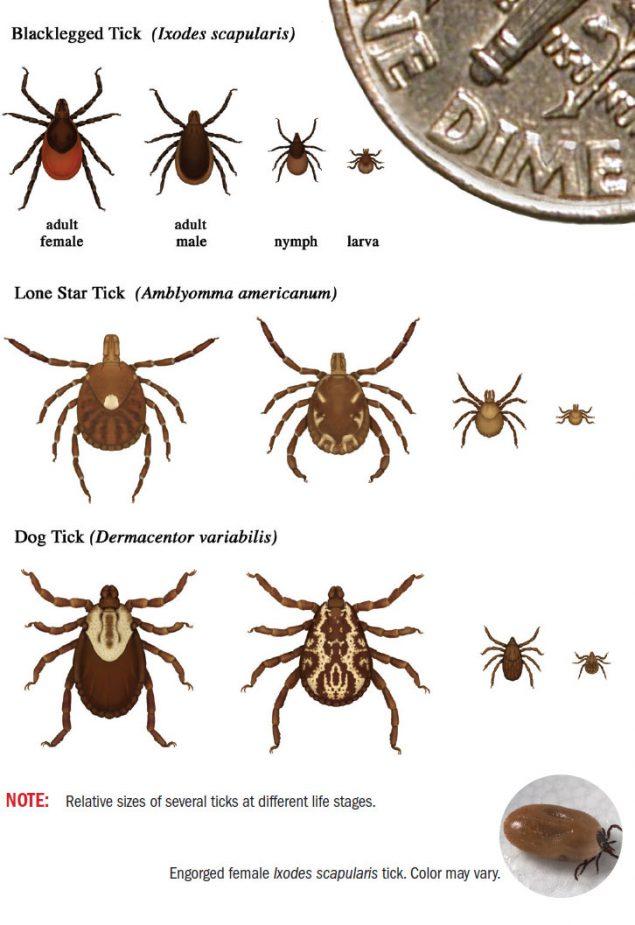 CDC diagram of various tick species