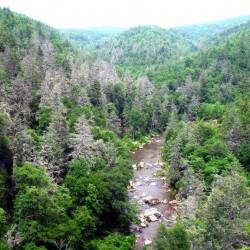 North Carolina hemlocks killed by woolly adelgid