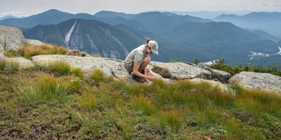 A Summit Steward examining alpine vegetation at the summit of a mountain in the Adirondacks