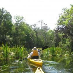 Kayakers in swampy river