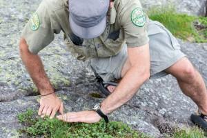 botany steward studies alpine vegetation