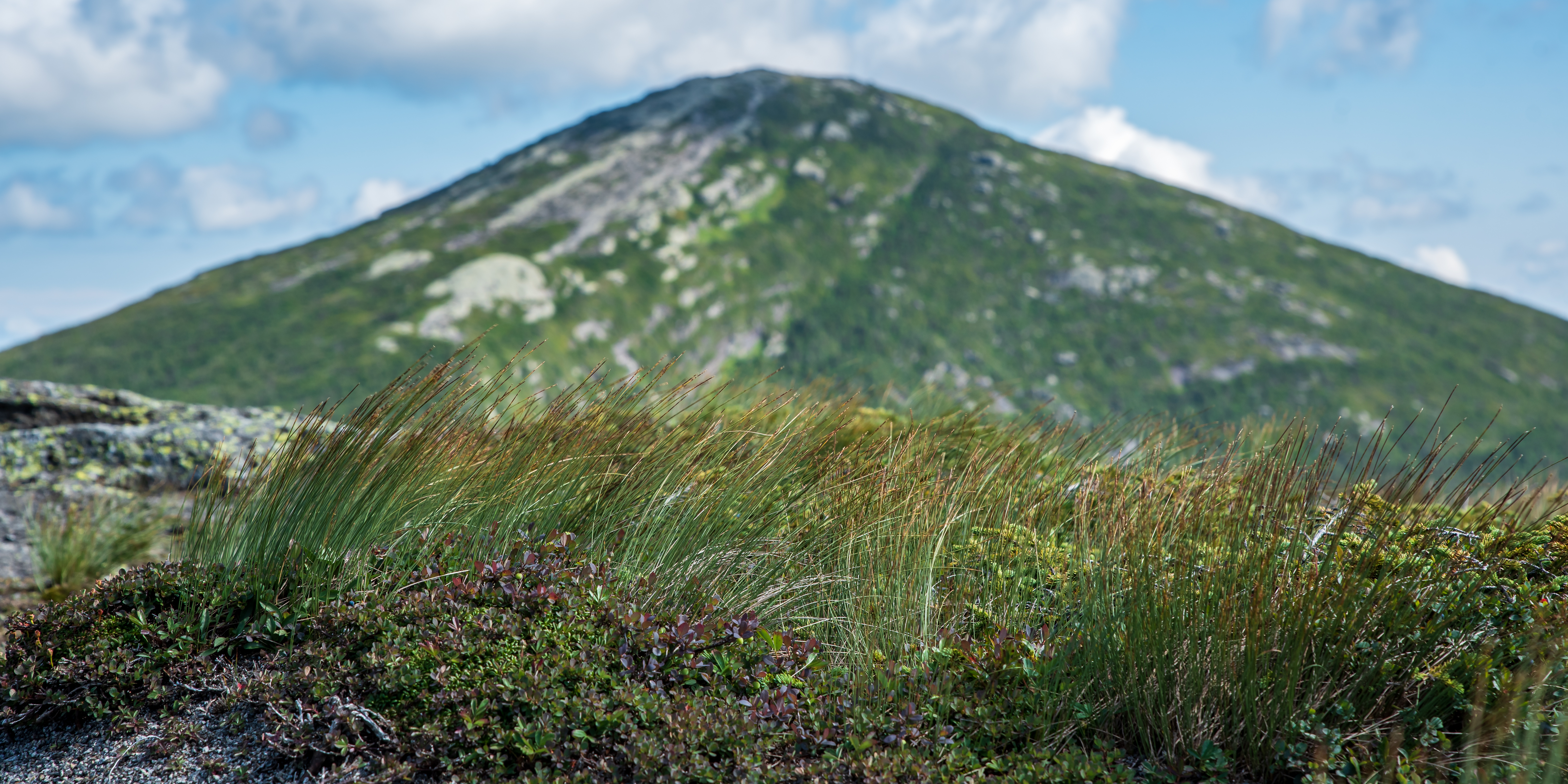 Alpine grasses with Mt Marcy in the background