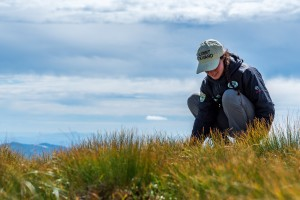 A summit steward kneels by alpine vegetation