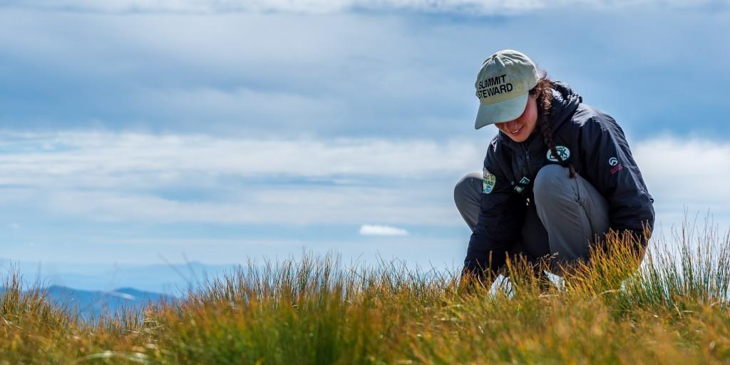 A summit steward crouches by alpine vegetation