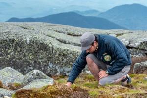 A summit steward crouches to study alpine vegetation