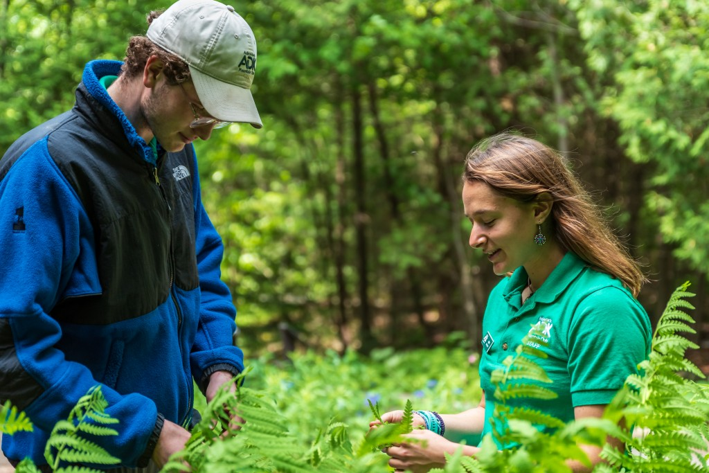 A naturalist shows a fern to a visitor