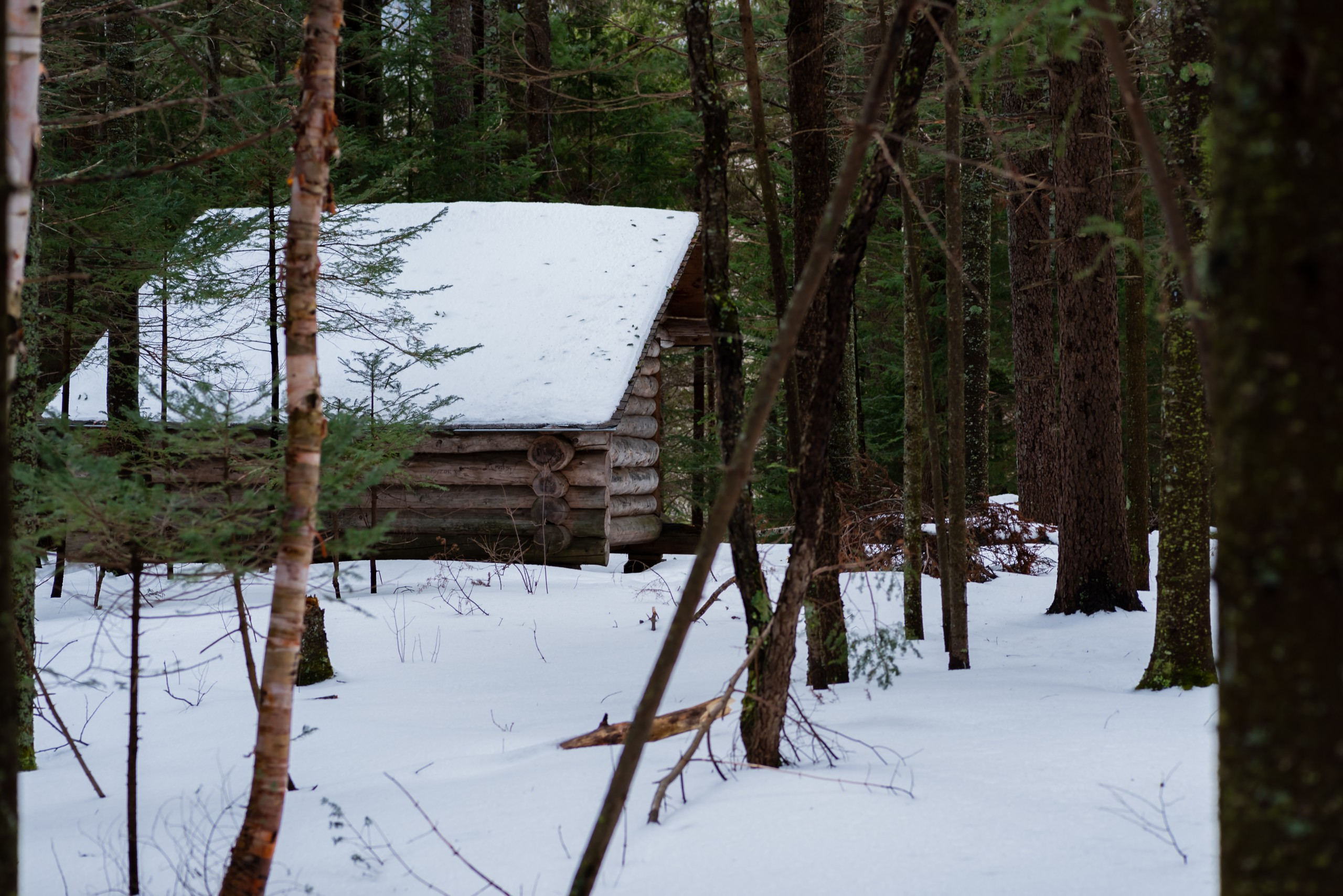 A lean-to covered in snow