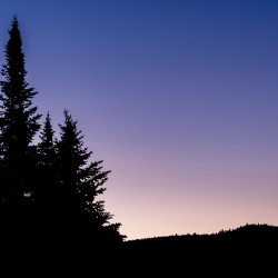 A silhouette of three trees against a purple sunrise