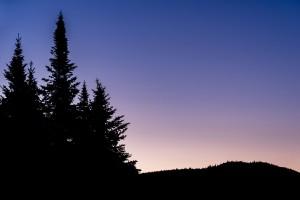 A silhouette of three trees against a purple sunrise