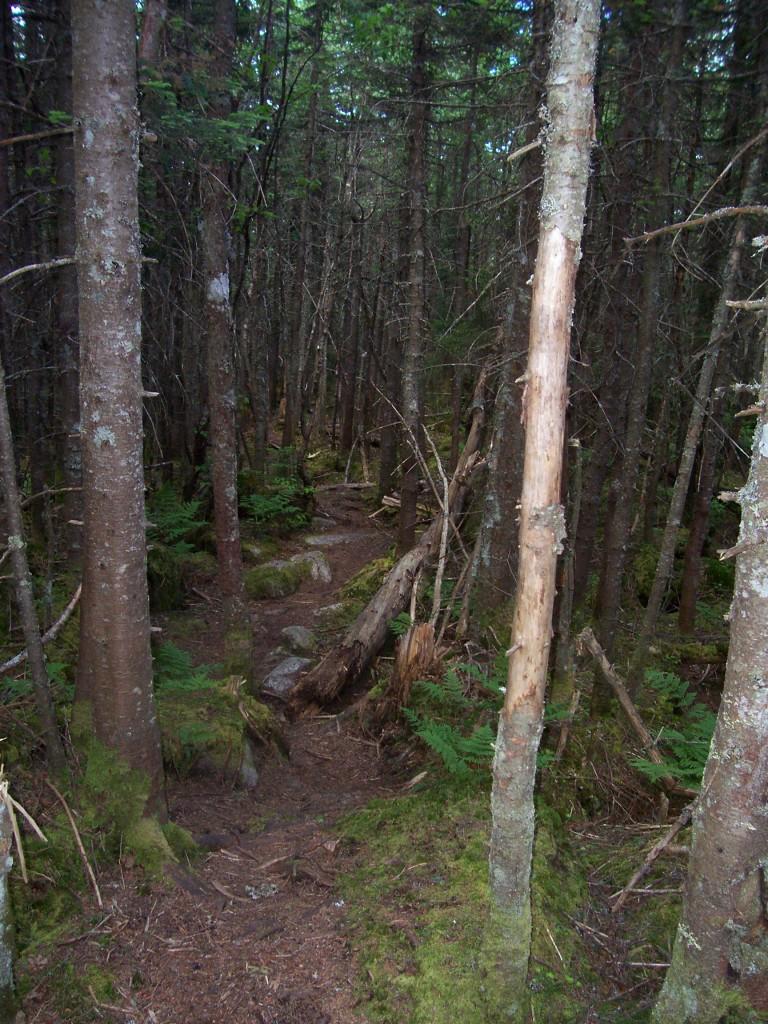 A narrow herd path winding through a forest