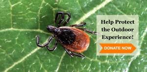 blacklegged tick on leaf