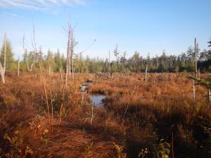 An open marsh