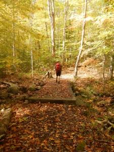 A man walking through a forest
