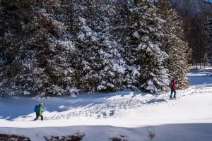 Two skiers climb a hill