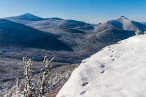 A snowy mountain landscape with paw prints in snow