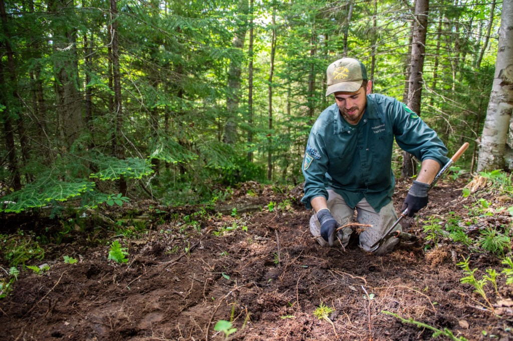 A trail worker clears a trail