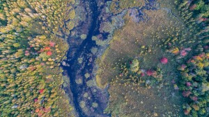 An aerial view of a bog